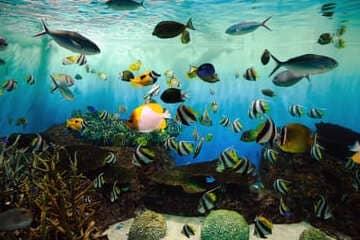L'un des plus grand aquarium du Japon