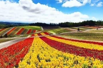 Paysage sur les fleurs de Furano pendant l'été
