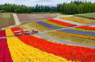 Des visiteurs circulent à travers des champs en fleurs
