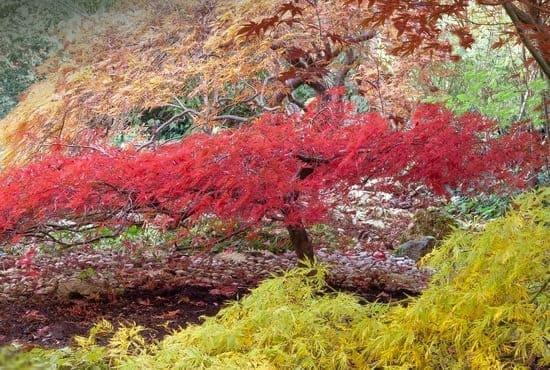 Les différentes couleurs des arbres japonais en automne