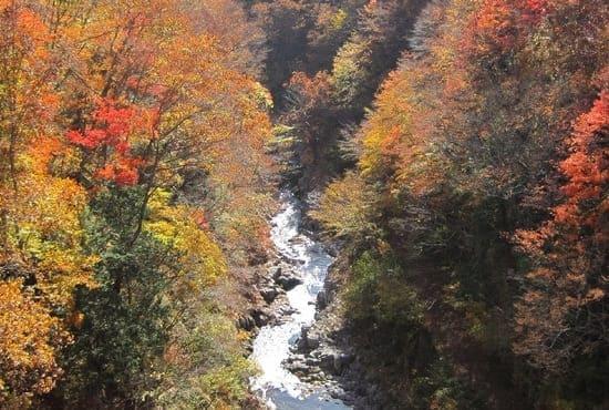 Photo des érables japonais séparés par une rivière