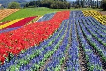Un champ coloré de Furano grâces à différentes plantes