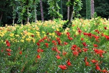 Les couleurs vives des fleurs de Saitama et ses environs
