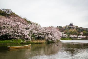 Panorama sur le jardin en fleurs de Sankeien