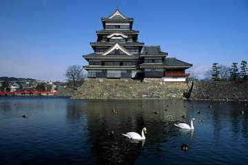 Le château de Matsumoto et sa faune aquatique