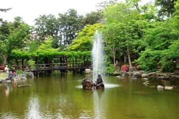 Un magnifique paysage verdoyant du parc