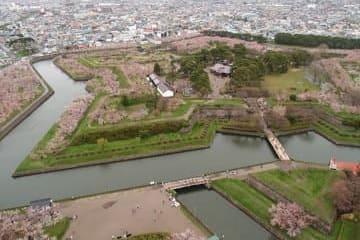 Photo sur le parc du fort avec ses cerisiers en fleurs