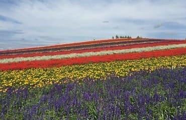 Un champ en fleur qui couvre tout le paysage
