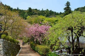 Une des belles allées des sanctuaires de Sakurai