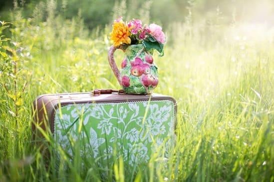 Une image colorée de verdure avec une valise