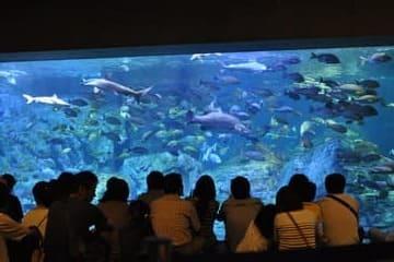 Une photo d'un bain de poisson à l'aquarium de Oita