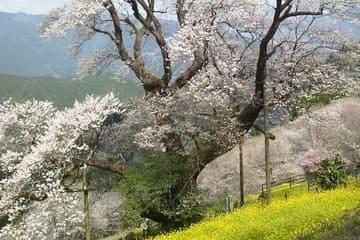 La nature en fleur à la ville de Kochi