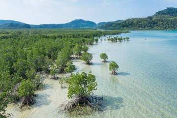 Paysage sur les terres sauvages de Iriomote