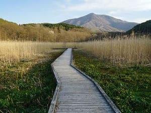 Panorama de l'allée de cèdre traversant le marécage et menant aux montagnes