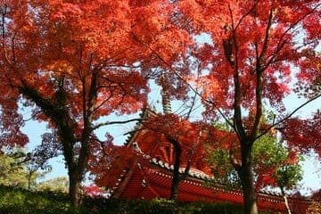 Le temple rouge de Hiroshima et ses arbres qui l'entour