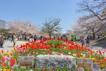 Le parc coloré Maizuru dans la ville de Fukuoka