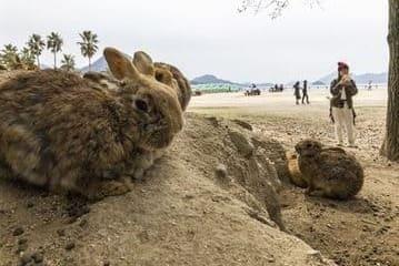 Les lapins sur la plage touristique de l'île