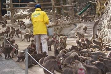 Photo d'un employé nourrissant les signes en libertés du zoo