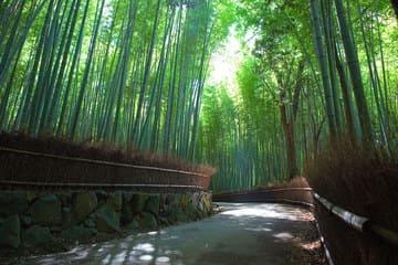 La forêt de bambou des quartiers Arashiyama et Sagano