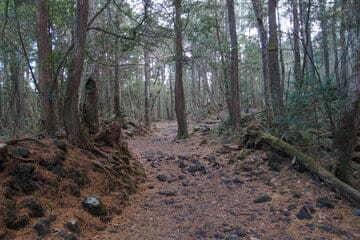 Photo des arbres à l'intérieur de la forêt