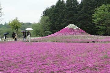 Une photo des fleurs roses de Saitama