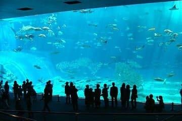 Photo des animaux à l'aquarium Churaumi à l'est de Nago.