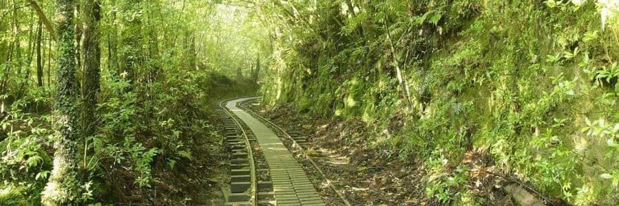 Vue sur un chemin de cèdre et toute sa verdure sur l'île